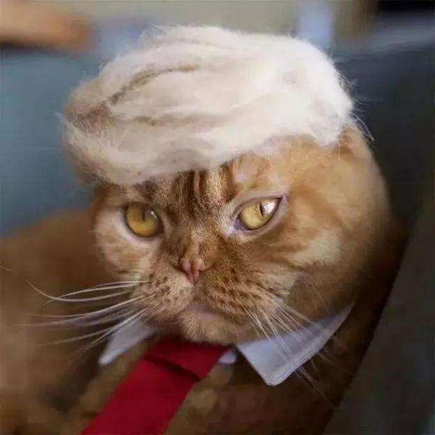 猫掉毛严重的原因和解决方法
