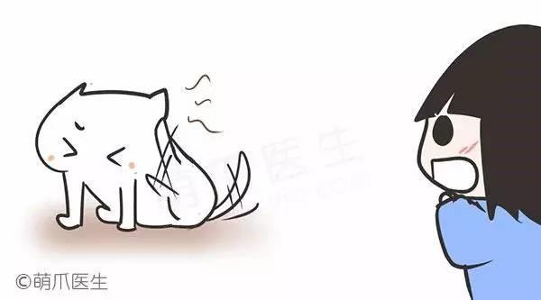 狗狗耳螨的常见问题和防治