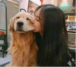 狗狗狂犬病的预防和常见问题