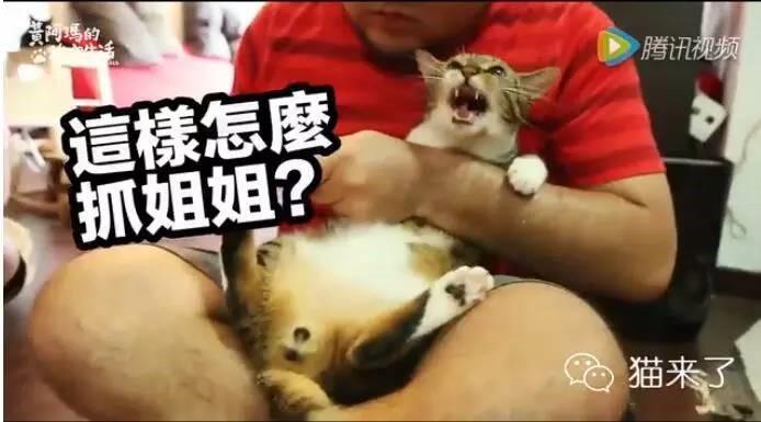猫怎么剪指甲?示意图和小技巧