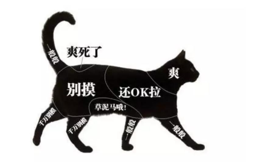 猫发情的时候,拍猫屁股有用吗?