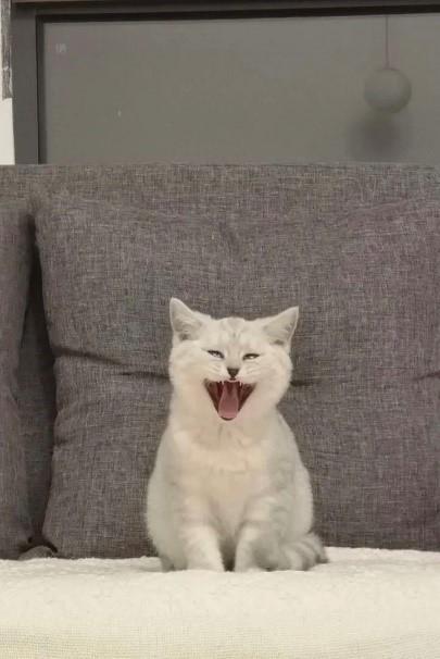 猫咪有口臭怎么办?口臭的原因和解决方法(附刷牙教程)
