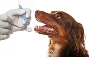 狗狗牙病问题---刷牙最有效
