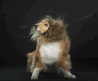 怎样给狗狗洗澡?洗澡步骤视频和小贴士