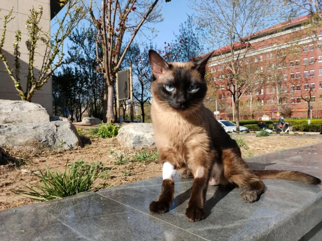 猫咪血栓的介绍和预防方法