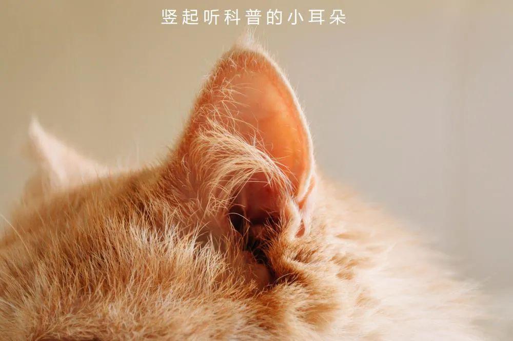 猫咪耳螨产生的原因和防治