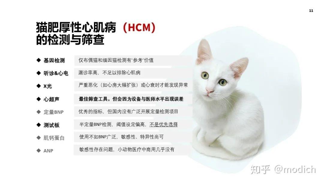 猫咪肥厚性心肌病的介绍和注意事项