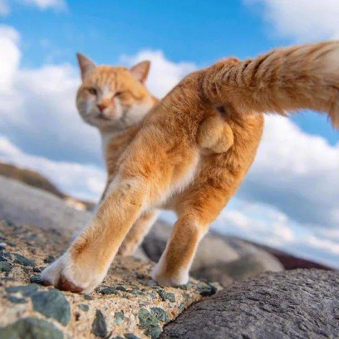 公猫咪的隐睾和绝育