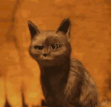 绝育公猫让母猫怀孕?孩子的爹成了未解之谜...