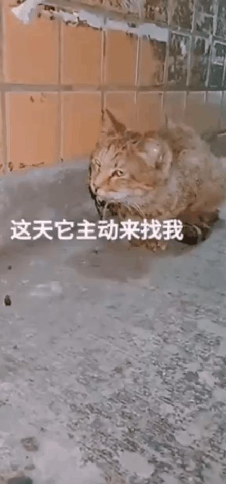 猫朝着我流口水,是想吃了我吗??