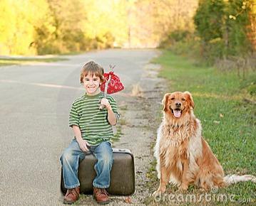 出国也要带你飞!人手一册的携宠物飞机出境全攻略