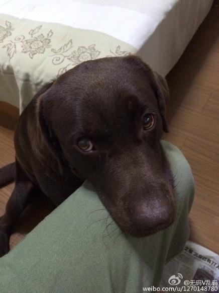 萌爪夜话:宠物最信任你的时刻是什么时候?