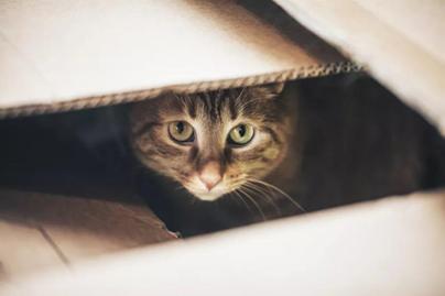 猫咪尿床是因为什么原因?怎么办?