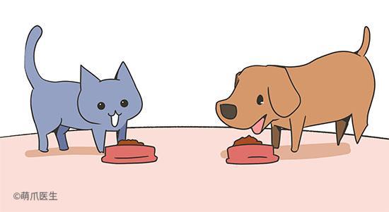 为什么你家宠物减肥又双叒叕失败了?