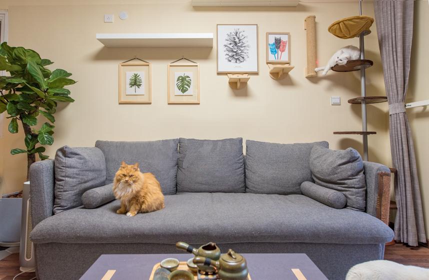 给家装个猫乐园,让彼此生活更快乐