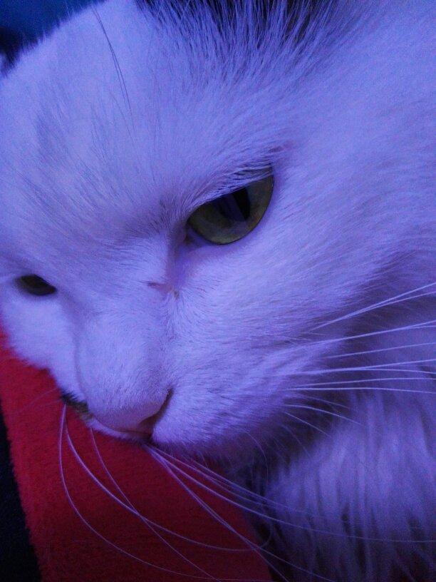 这是猫癣吗?