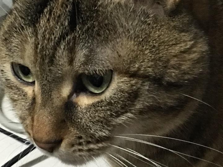 我家喵主子是不是眼角生病了?