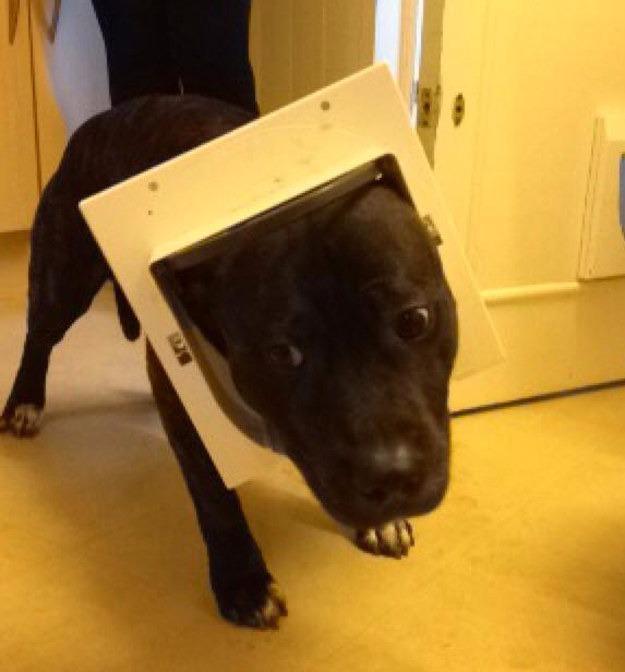 狗生已思考好,请帮我把狗头弄出来…
