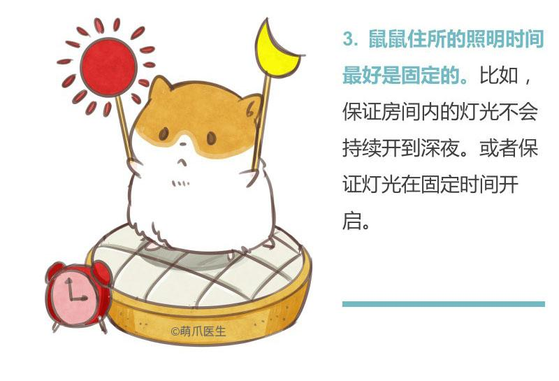 仓鼠宝宝的行为特征,你了解多少?