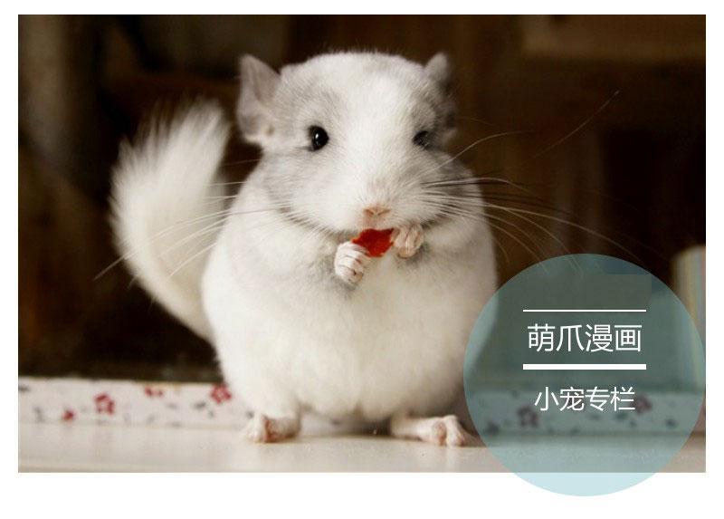 暖萌暖萌的龙猫,其实是一只隐藏吃货你造吗?