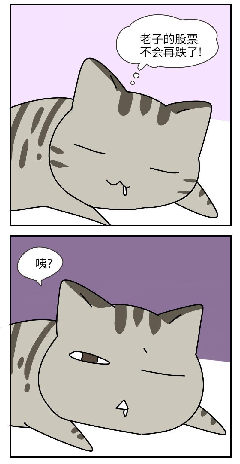 谱写了深沉悲壮血泪励志传奇的美国短毛猫,如今竟然靠脸吃饭?