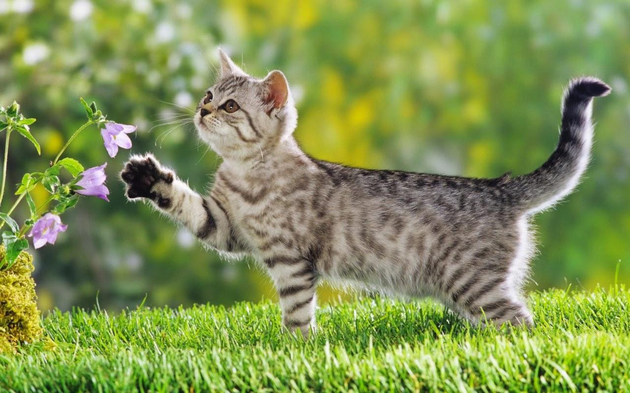 如何优雅地跻身铲屎大军?看这里,手把手教你养新猫