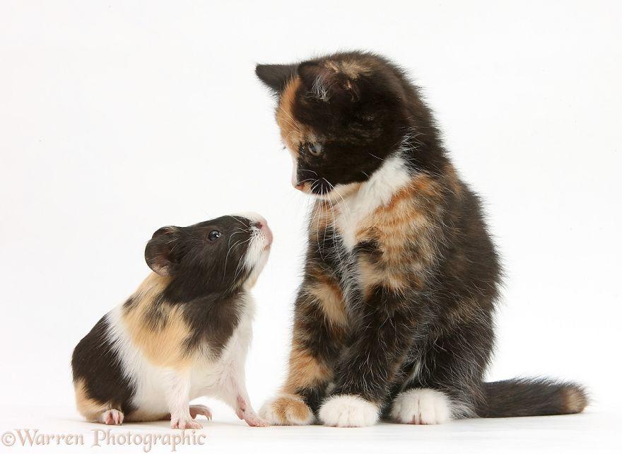 说出来你可能不信,我是你跨越物种的亲弟弟啊……