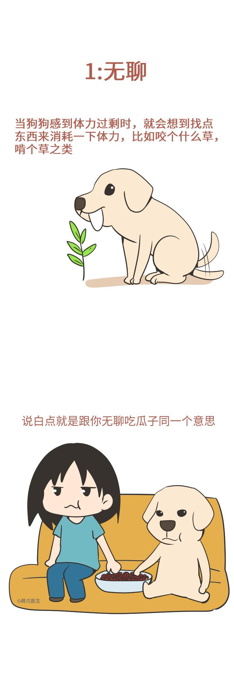 天啦噜,我家狗狗竟然在吃草!!!这是怎么回事,怎么办呢?