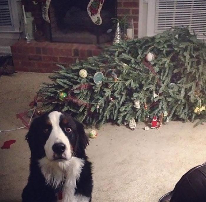 有毛孩子的圣诞,会过成什么样子?