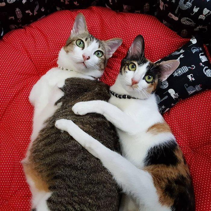 两脚猫的幸福生活
