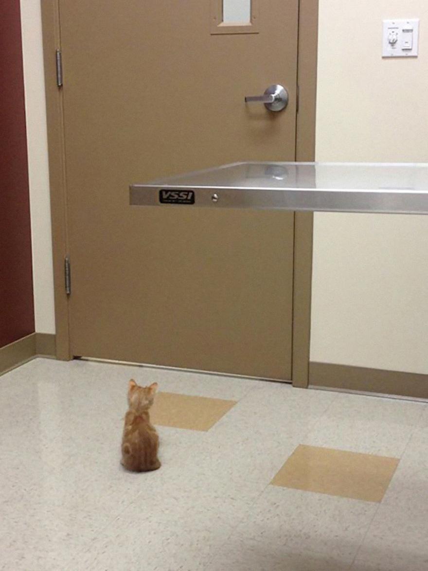 兽医院好可怕,本宝宝要躲起来!