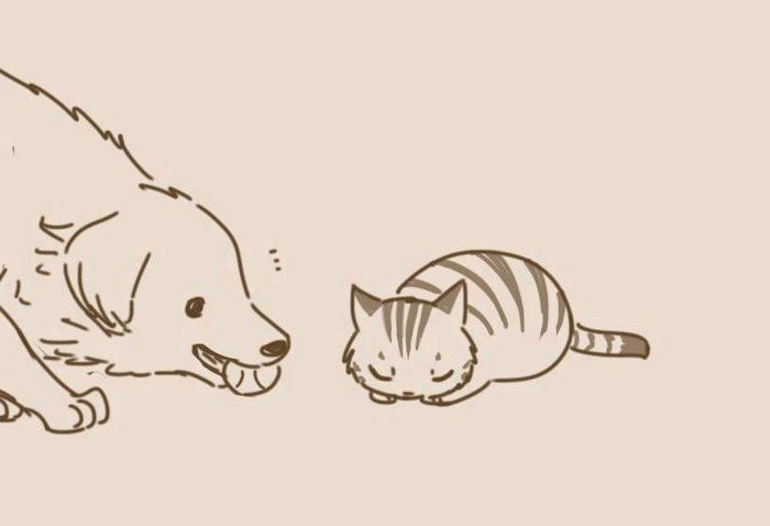 猫咪内心深处的柔软面,我猜中了开头,却没猜中结局