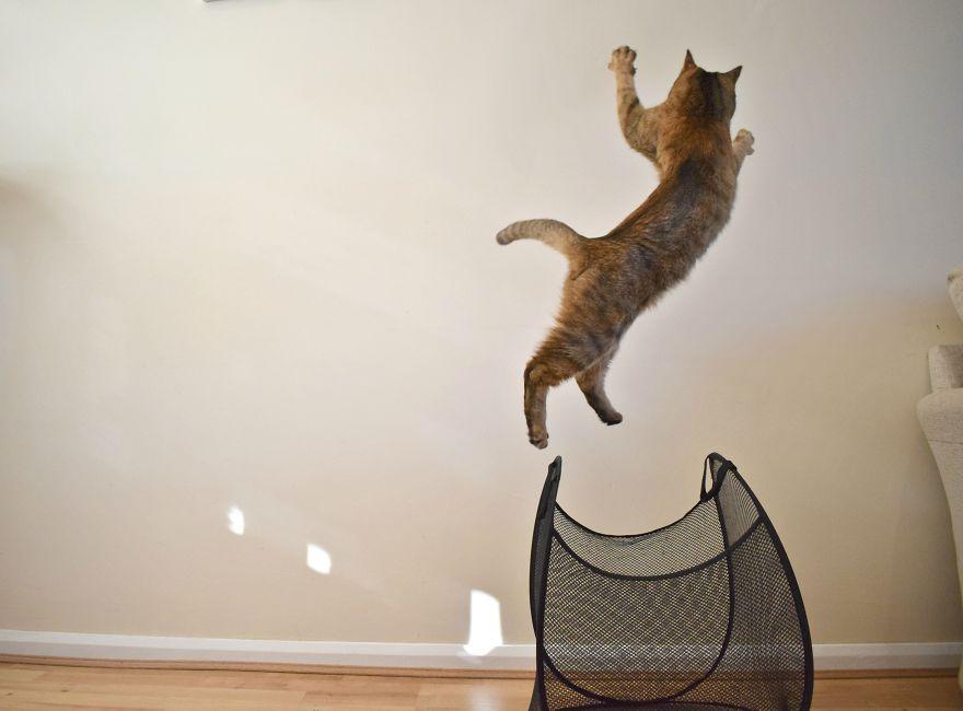 谁说猫咪最爱纸箱?本喵偏喜欢洗衣篮!