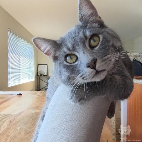 你的猫瘾有多深,快来鉴定一下!
