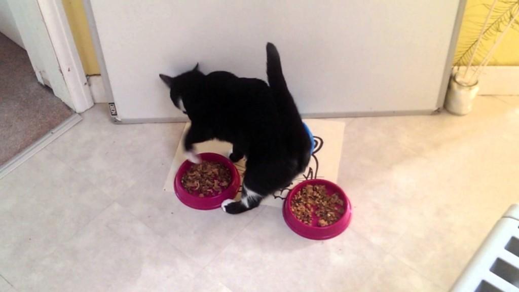 猫咪的10个独特行为,不知道都不好意思自称是猫奴!