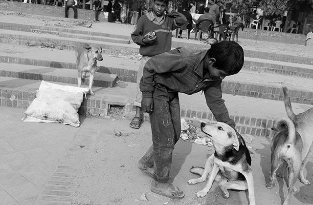 他们缺失了家庭的爱,庆幸有一群同病相怜的流浪动物陪伴