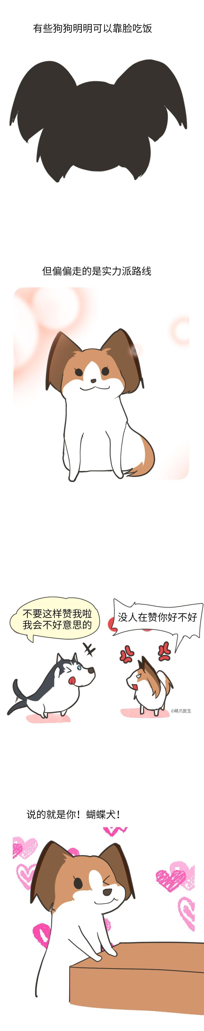 蝴蝶犬:聪明+颜值,逆天了